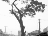 bangladesh-film161