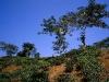 bangladesh-film780